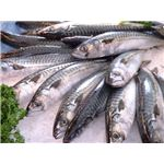 Image Mackerels Gout Food