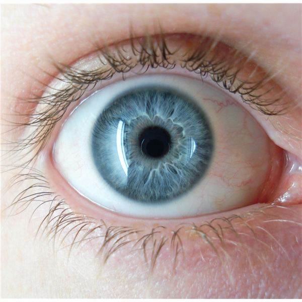 Light Blue Eye Color
