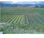 800px-La trinidad farm