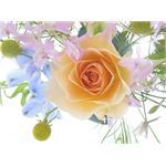 rose-backgrounds-bouquet-with-rose