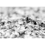 """Ant"" by Olivier Bareau"