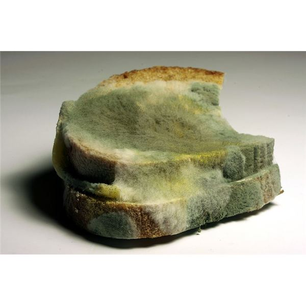 Three cool science experiments with bread mold