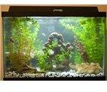 fish tank by dlkinney
