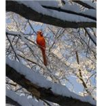 """""""Ice Bird"""