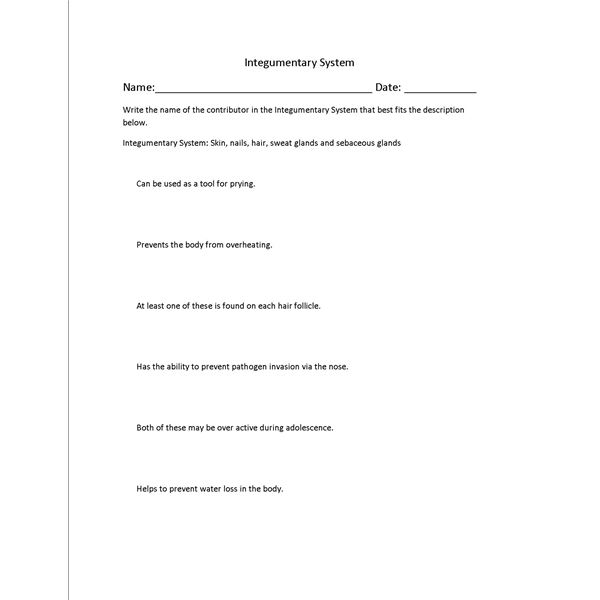 Free Worksheets nervous system review worksheet : Skin Lesson Plans: Integumentary System