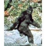 The first sighting of Bigfoot.