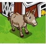 Adult Mule