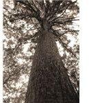 Landscape Photography: Perspective