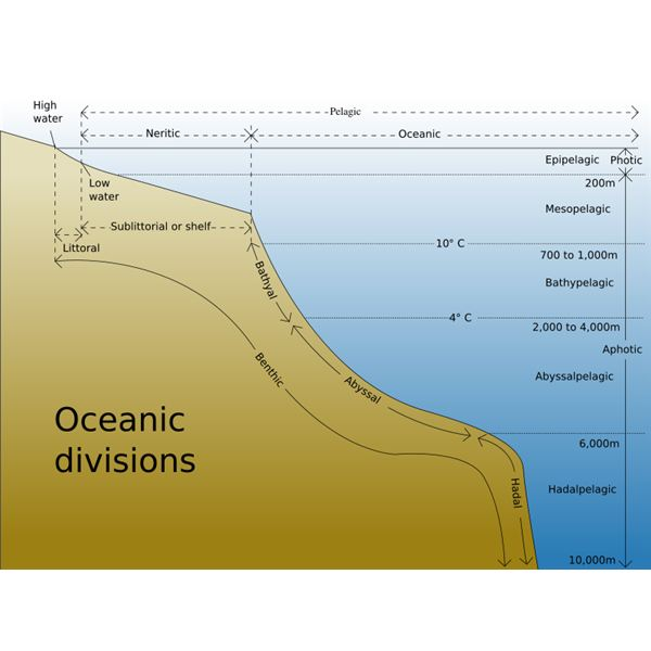 Ocean Floor Topography And Features Of The Ocean Floor - Continental oceanic