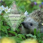 How England is Helping Hedgehogs