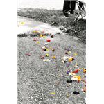 Wedding Petals Selective Colorization