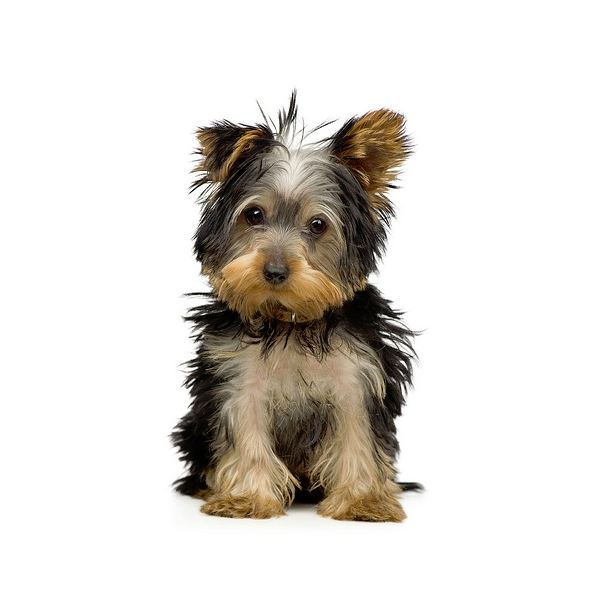 Dogs That Are Good for Asthma Sufferers   Dog Care - Daily ...