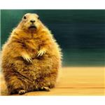groundhog-day-backgrounds-groundhog-on-beach