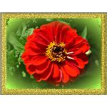 Add a Vignette and Gold Frame with Pixlr