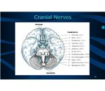 Cranial Nerves (CDC)