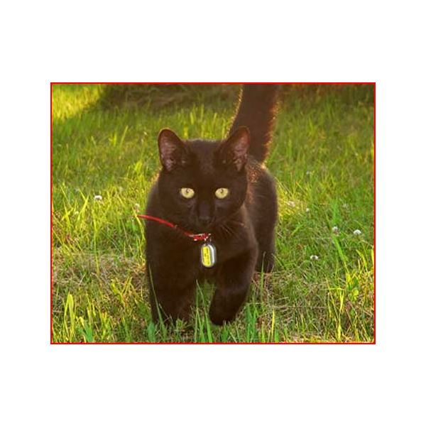 Lost Pet Finder For Cats