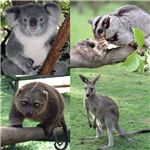 Marsupialia collage