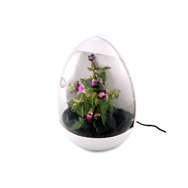 10 of the coolest usb office gadgets - Cool office plants ...