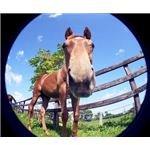 Fisheye Horse