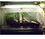 Mini Greenhouse 2