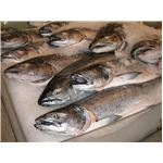Salmon for sale