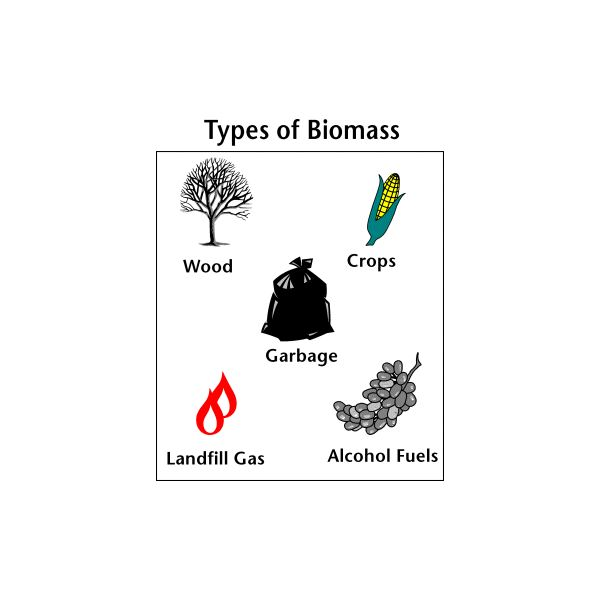 Sources of biomass materials what are