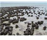 Modern stromatolites in Western Australia