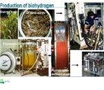 H2 Producton( www.biohydrogen.)