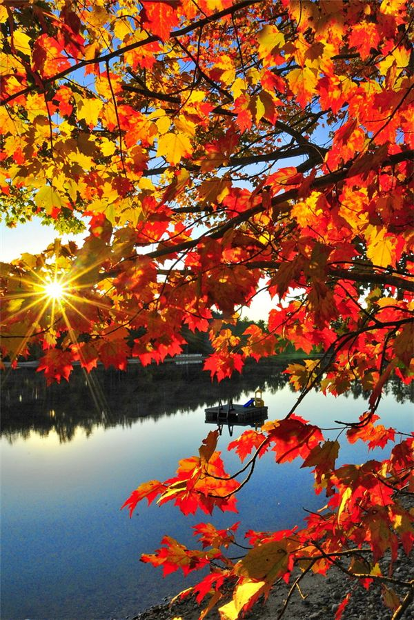 Image Gallery of Autum...