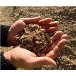 Biomass - Sustainable & Renewable