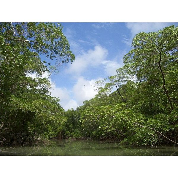 Where are Rainforests Found? Tropical Rainforests of the World ...