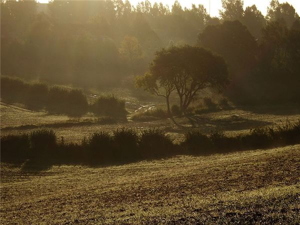 Autumn morning in Osbektal, near Flensburg, Germany