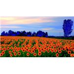 Use Photo Editing Software to Enhance Your Flowers