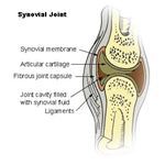 Illustration of Synovial Joint