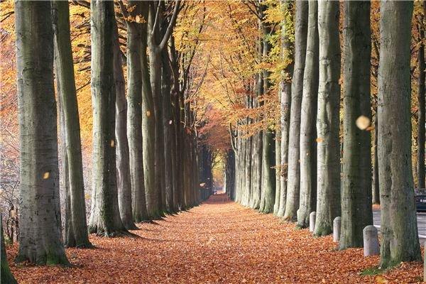 Brisk Fall Walk