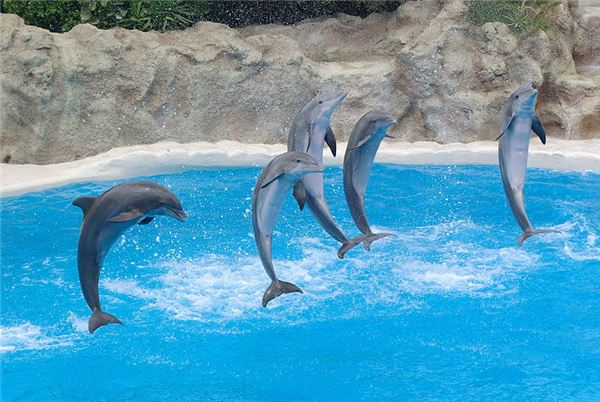 Dolphins: More Than Meets the Eye