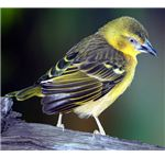 A close-up shot of a bird