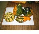 gourd choices