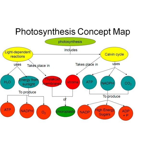 photosynthesis concept map answers