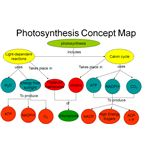 photosysnthesis map