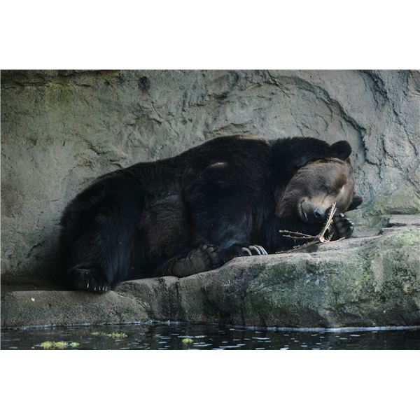 Great Bear Hibernation Lesson & Projects for Preschool ...