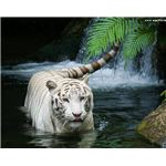 white-tiger-waterfall