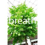 Go Green to Breathe Easy
