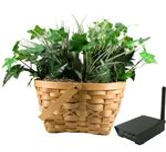 Hidden Camera Plant