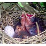 Egg and Nestlings