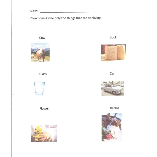 math worksheet : living and nonliving things lesson plans for kindergarten : Living And Nonliving Worksheets For Kindergarten