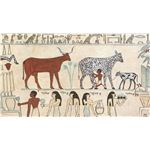 an early example of animal husbandry, note the boy milking the cow