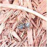 Bug Shell