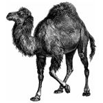 Perl's Unofficial Symbol is the Camel