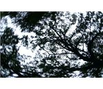spinning trees